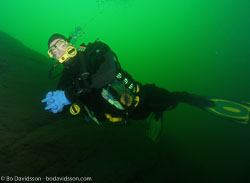 BD-100522-Nydalen-5225114-Homo-sapiens.-Linnaeus.-1758-[Diver].jpg